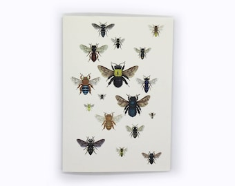 4-pack Australian native bee squadron card