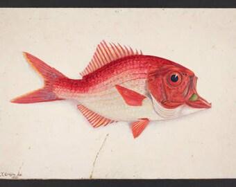 Print: Red Fish