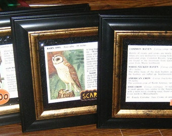 Set of 3 Framed Vintage BIRD PRINTS Owls and Crow - Black Glitter Paper - Halloween Decor, Halloween Decoration