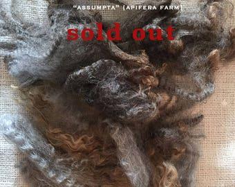 WASHED Wool: Assumpta a Leicester Cross
