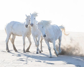 Three Play on the Beach - Fine Art Horse Photograph - Horse - Camargue - Fine Art Print - Camargue Horse