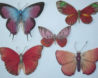 Set of magnets butterflies multicoloured multitailles