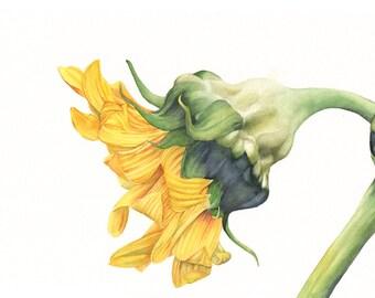 Sunflower print of watercolour painting S3915 - 5 by 7 size smallest print wall art print - bird art print
