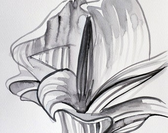 Black And White Line Drawing Flower : Black and white roses flowers elegance eps