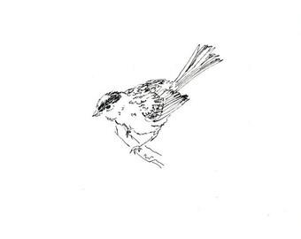 Skizzenbuch Verkauf - Vogel #18 Original Tuschezeichnung - 8 x 10 Songbird Original-Kunst