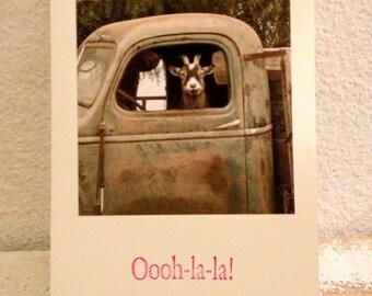Photo Card ,Goat Truck Driver, Oooh-la-la! , Funny Handmade Card