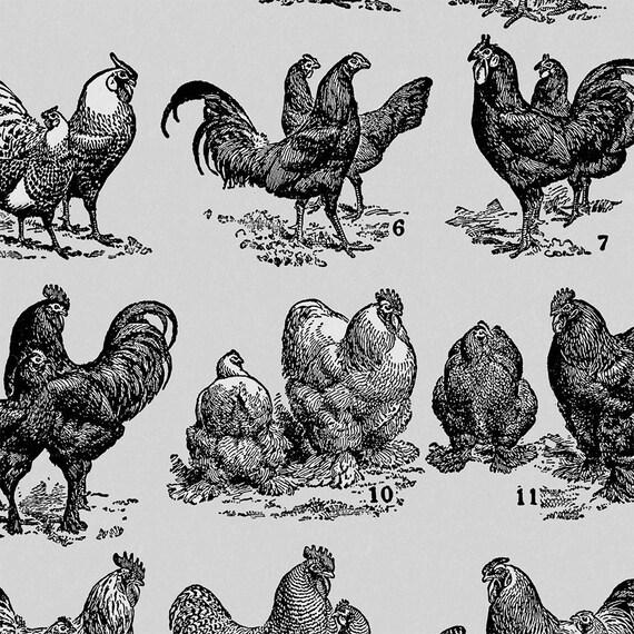 Wunderbar Huhn Küchendekor Bilder - Küchen Ideen - celluwood.com
