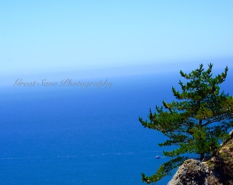 Tree by the Pacific, Photography, Home Decor