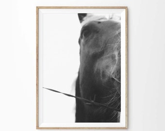 Black and White Horse Photography | Equestrian Art | Printable Art Horse Photo | Wall Art Home Decor | Horse Print Instant Download