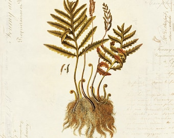 Vintage Botanical Fern Plant on French Ephemera Print 8x10 P36