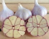 Garlic Bulbs Organic non GMO - 3 bulbs For Fall Planting or Cooking