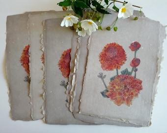 Chrysanthemum Print on Handmade Cotton Paper