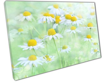 Wild Daisy flower art Ready to Hang Canvas XIC156