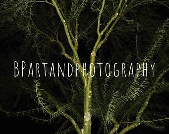 A glimmer in the night // photography // nature // tree //landscape