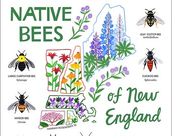 "11x14"" Native Bees of New England Print"