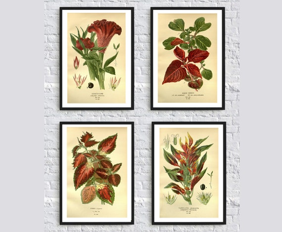Dark Red Flowers Wall Art Print Flower Botanical