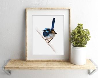 """8x10"""" Superb Fairywren - Australian Native Bird Print - Blue Wren - Wildlife Print"""