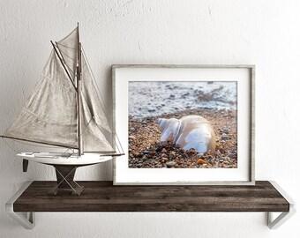 Seashell Print, Shell Art Print, Ocean Decor, Beach Photography, Shell Photo, Seashell Photography, Coastal Wall Decor, Nautical Home Decor
