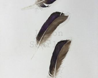 Reproduction watercolor nature Illustration, pen, Watercolour, Bird feather