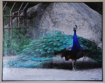 Photograph mounted on canvas 16 X 20 Original photograph