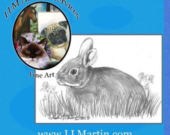 Yard Bunny Drawing4