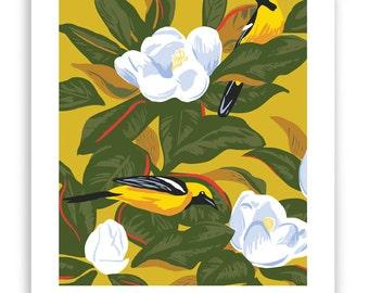 "ART139: Orioles in Magnolia Tree 8"" x 10"" Art Reproduction"