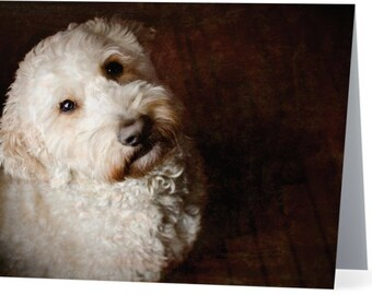 Goldendoodle - blank note card, Gifts for dog lovers, Gifts for dog people, Cards for dog people, Dog cards