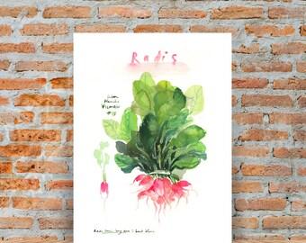 Pink radish print, Watercolor vegetable print, Kitchen art, Garden print, Home decor, Vegetable painting, Veggie illustration, Food artwork