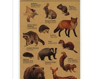 Animal Stickers - Hedgehog Sticker - Bear Sticker - Rabbit Sticker - Planner Stickers