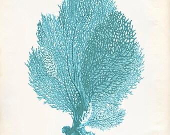 Vintage Sea Fan Coral Print 8x10 P200