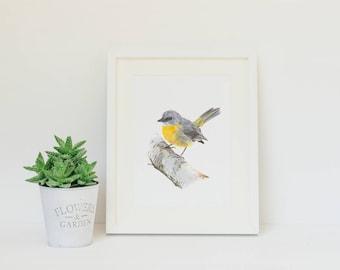 "8x10"" Eastern Yellow Robin - Australian Bird Art - Wildlife - Art Print"
