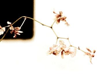 Minimalist Pink Botanical Photograph Dream A Little Orchid Flower Decor Wall Art Print