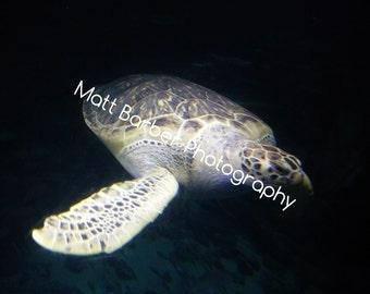 Wrap Around Turtle Canvas (Large)