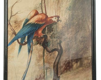 original 1927 watercolor painting Scarlet Macaw J R Hille