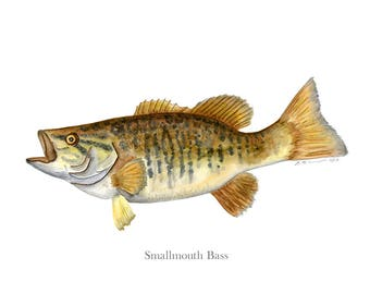Smallmouth Bass - Lake House Art - Fish Watercolor Print - Lake House Gift - Fishing Gift for Dad - Lake Decor - Bass Fish Decor - Yellow