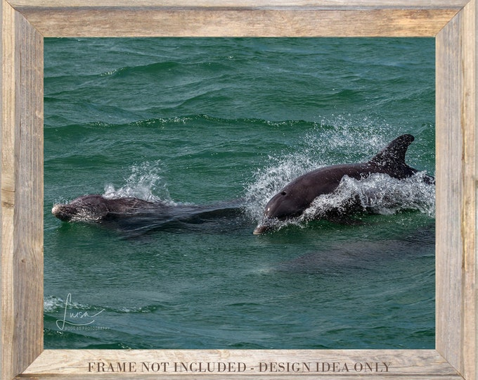 "Featured listing image: Photography PRINT OR CANVAS - Wall Art Decor - ""Dolphins on Boca Ciega Bay"""