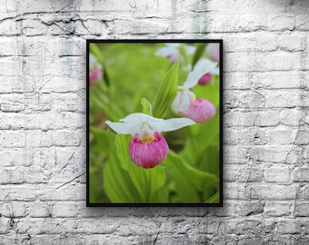 Flower Photo, Digital Download, Lady Slipper Flower, Nature Photography, Printable Wall Art,Home Decor,Wall Decor,Cottage Decor,Mother's Day