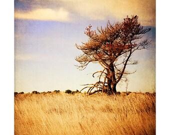 Art Print: Lone Tree photo. Cross process print, color, textures, fine art, summer, photoshop, landscape, art, wall art