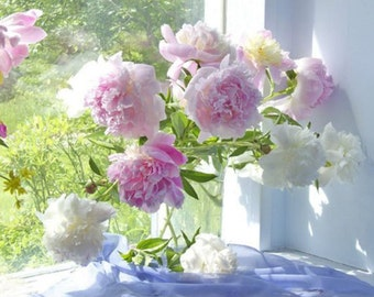 Peony Photograph, Flower Still Life,  Floral Art Print, Shabby Chic Decor, Peony Art, Peony Wall Decor