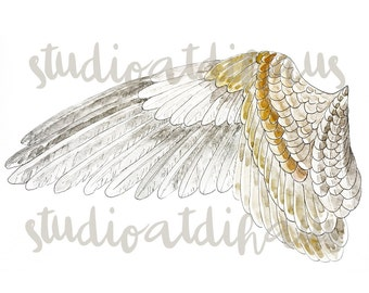 Eagle's Wing Watercolor Pen and Ink