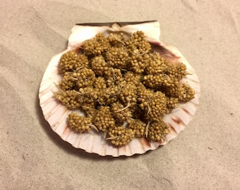 Spray Millet ~ Hermit Crab Food