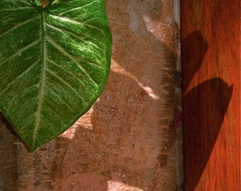 lime green beige brown red orange  photograph LEAVES BALI TEXTURES  abstract travel  Bali  Asia textures shadows nature