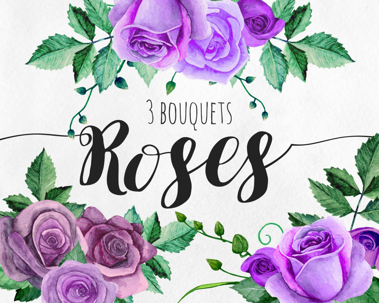 Purple roses clip art watercolor flowers clipart floral for Can you get purple roses