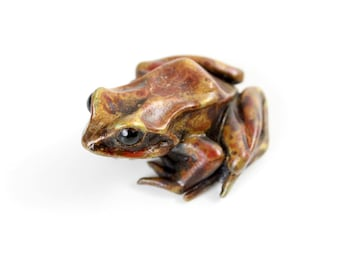 European common frog - Bronze, small, mottled brown patination