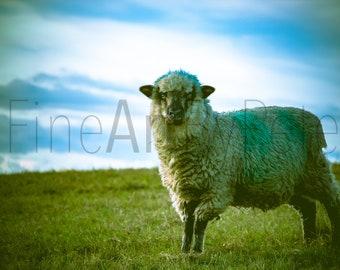 Sheep Printable Photograph, Instant Digital Download, Animal Wall Art Print, Farmhouse Home Decor, Lamb Photo, Farm Animals, Rustic Decor