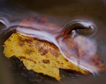 Fall leaf, autumn natural photograph
