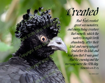 Carassow curly feathers crown excodic black bird Scripture Photograph Collage, 8x10 11x14 16x20, Genesis 1-21-26 Created by Gina Waltersdorf