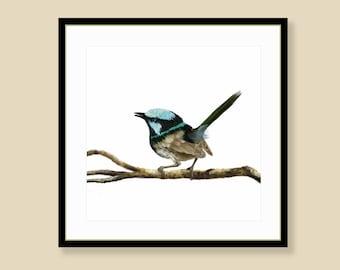 Blue Fairy Wren Print - digital illustration printed on premium archival art paper