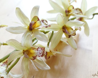 Apple Green Cymbidium Orchids (FB0036-03) | one stem – silk flower – artificial flower – flower crown – decoration – orchid wreath – bouquet