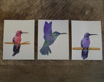 Original Watercolour Paintings - Humming birds